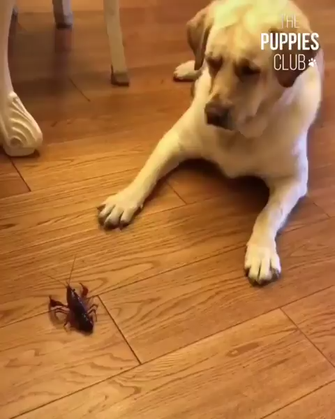 What the fluff is this creature hooman