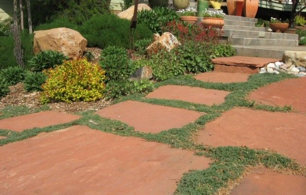 Drought Tolerant Full Sun Ground Covers For San Go