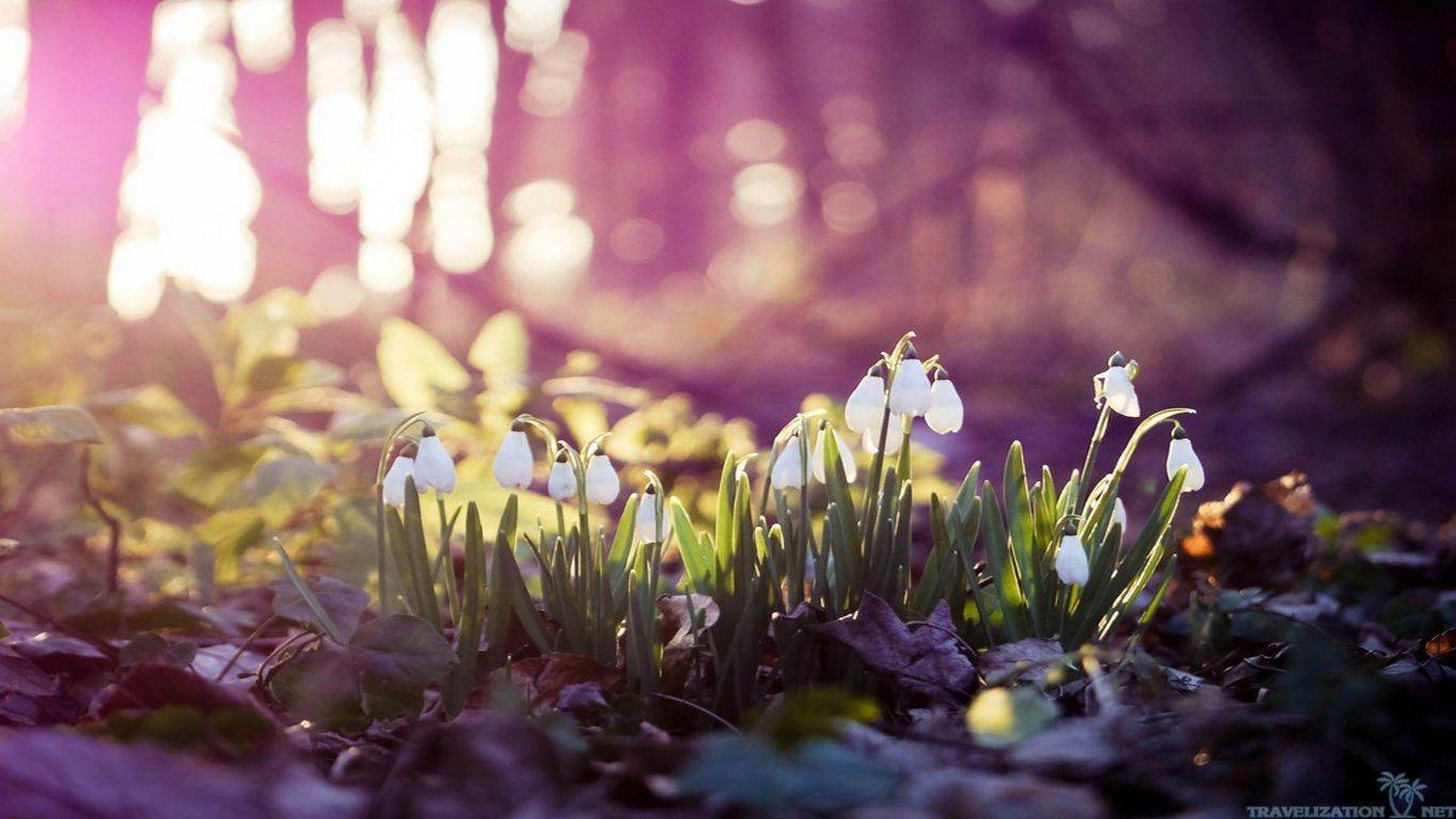 Early Spring Desktop Backgrounds Hd Best Wallpaper Hd Spring Wallpaper Hd Spring Desktop Wallpaper Spring Wallpaper