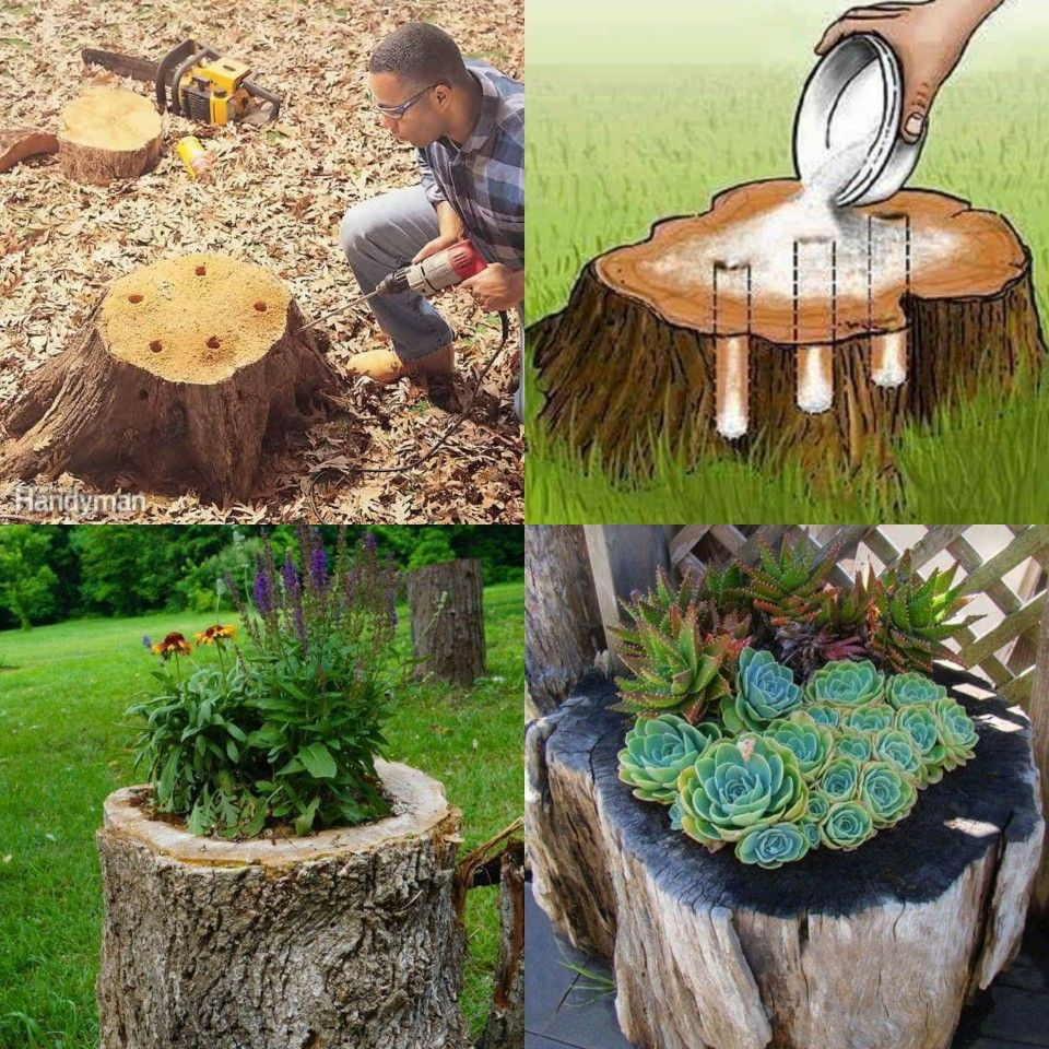 Old Tree Stumps Turned Into Beautiful Flower Planters! 1- Drill a hole into  the top and widen it until there is a 3 inch border. 2- Drill sloping holes  from ...
