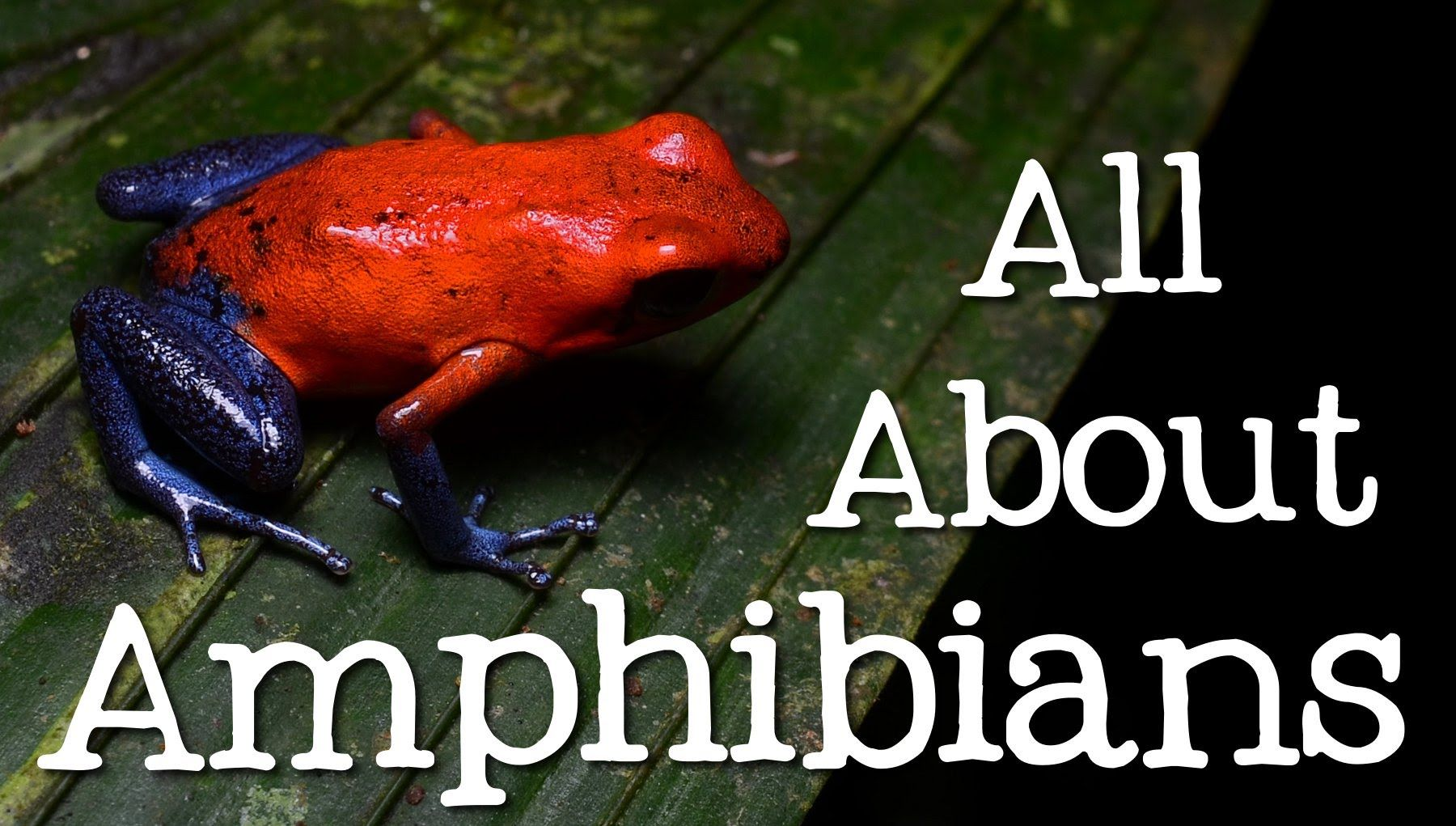 All About Amphibians Tadpoles Frogs And Salamanders