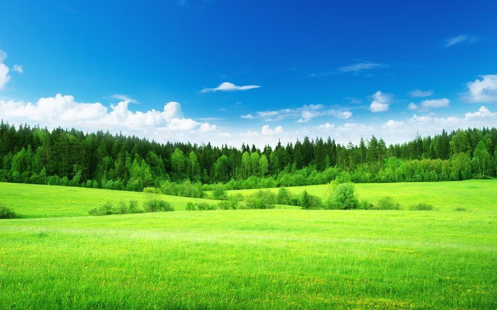 Filipe Moura On Twitter In 2020 Green Nature Wallpaper Landscape Wallpaper Grass Wallpaper