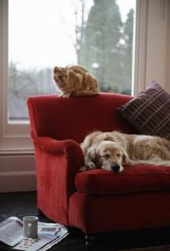 How To Fix Fading Sofa Fabric Clean Couch Pet Odors Dog Smells