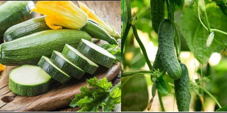 6 Perbedaan Timun Jepang Dan Zucchini, Serupa Tapi Tak Sama Loh!