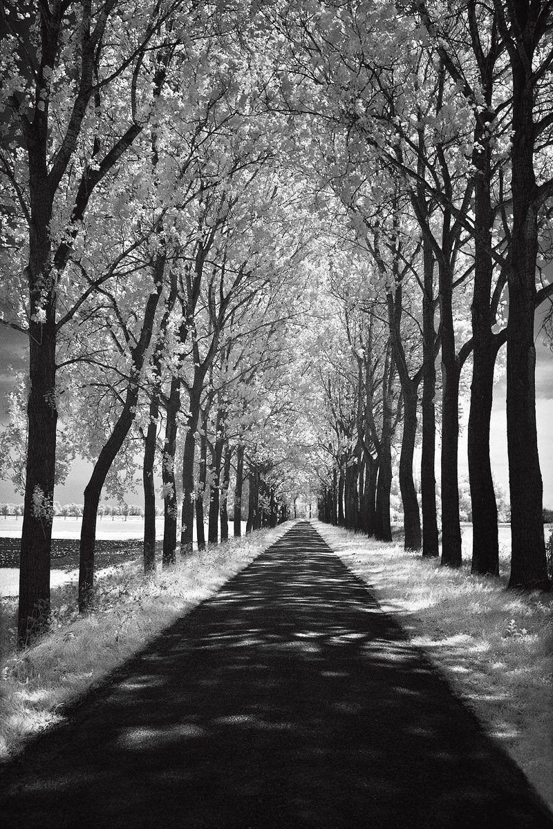 Follow Me by Ily Szilagyi - Canvas, Wood, Acrylic, Aluminium - ArtToCanvas