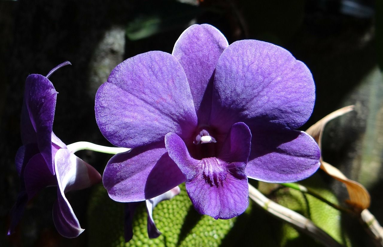 Free image on pixabay orchid dendrobium purple most