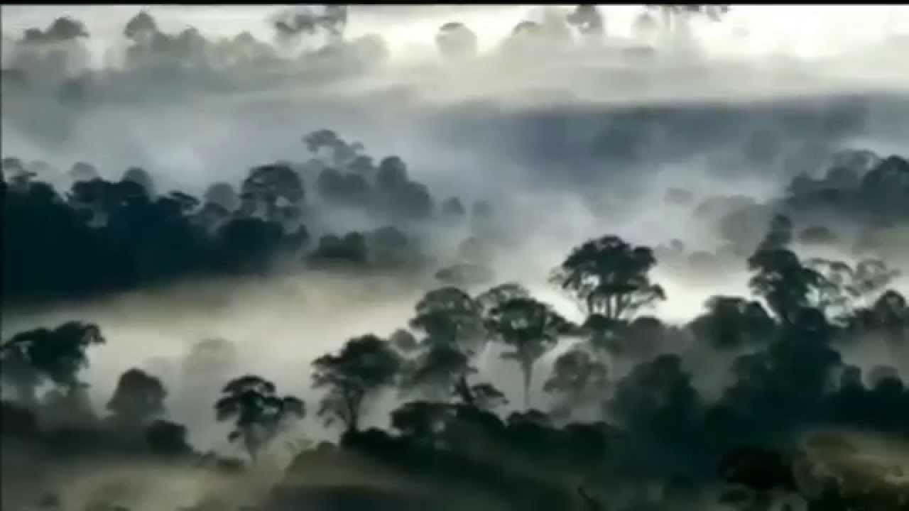 Borneo Biotic And Abiotic Factors 4 Min Borneo Rainforest
