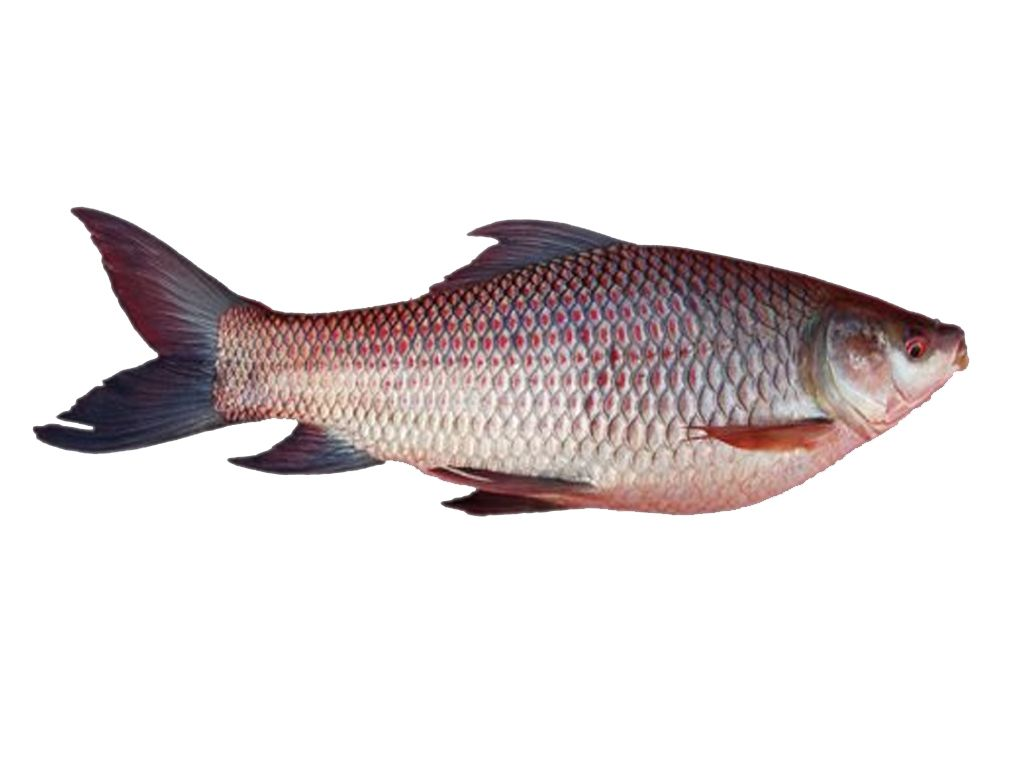 Rohu fish curry cut only at kg http www for 99 5 the fish