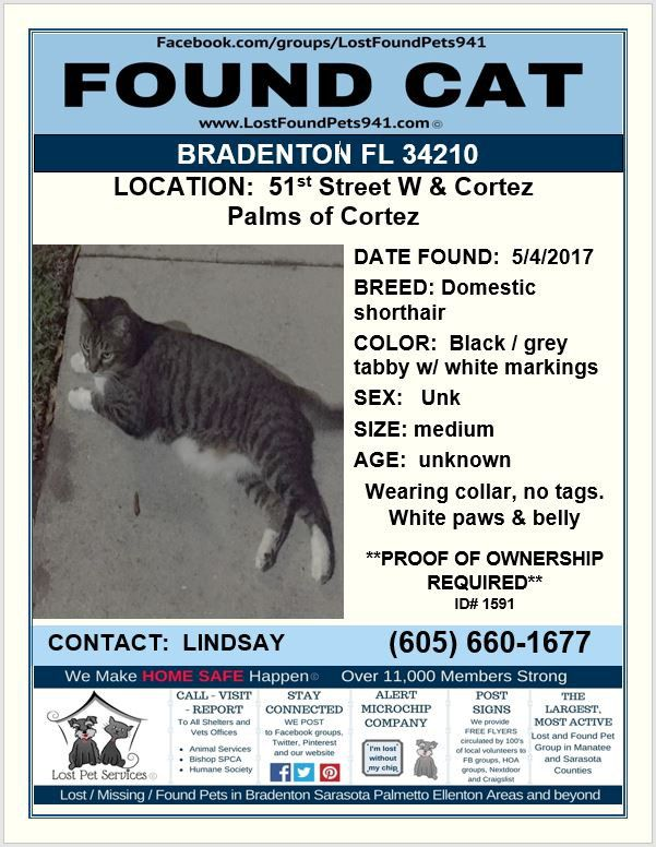 Do You Know Me Foundcat Lost Cat Tabby Bradenton Fl Manateecounty Share Lostpetservices Found Cat Service Animal Manatee County