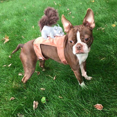 Fayetteville Ar German Shepherd Dog Meet Parker A Dog For