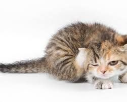 Animals Cute Kittens Google Search Cute Animals Kitten