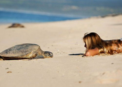 Untitled | via Tumblr #summer #turtle