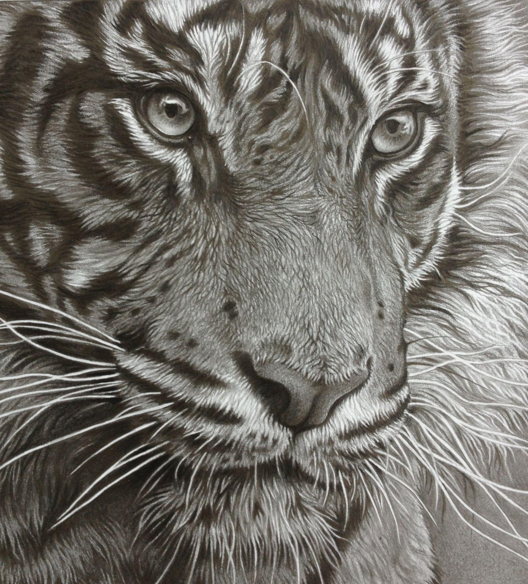 Tiger pencil drawing Tiger drawing, Animal drawings