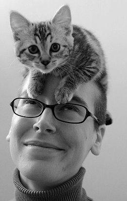 Cat on the head