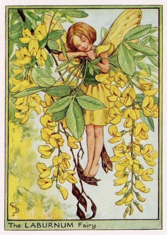 The LABURNUM Fairy ~ Cicely Mary Barker ~