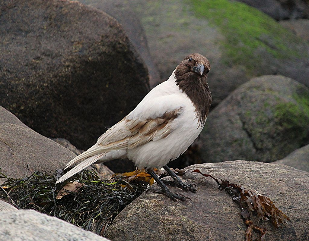 Souvisejici Obrazek Ptaci Krkavci Havrani Vrany Straky Sojky