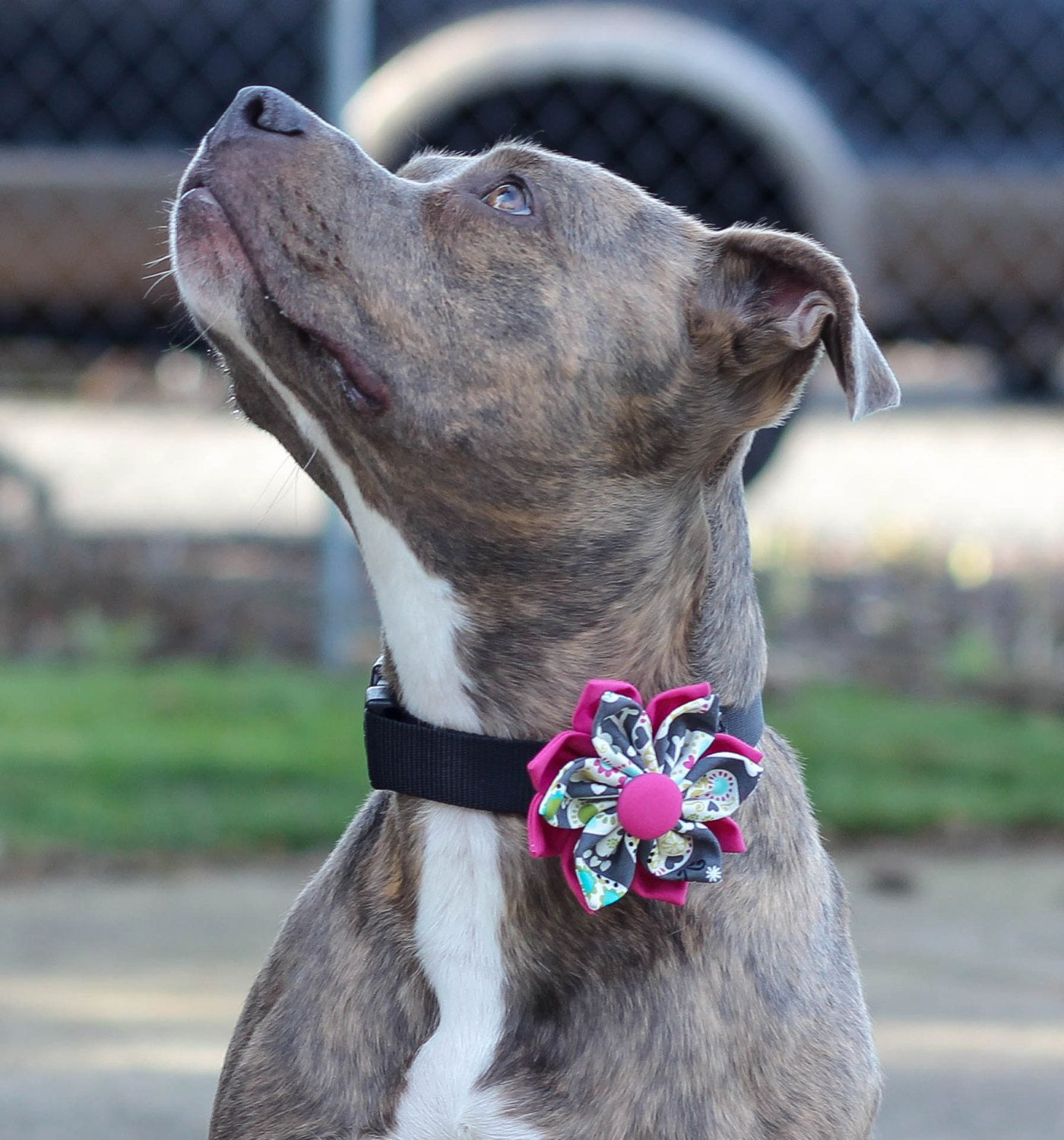 Dog Collars With Bows And Flowers