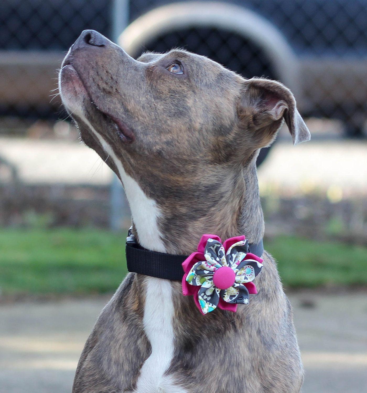 Dog collar fabric flower pink and gray sugar skulls