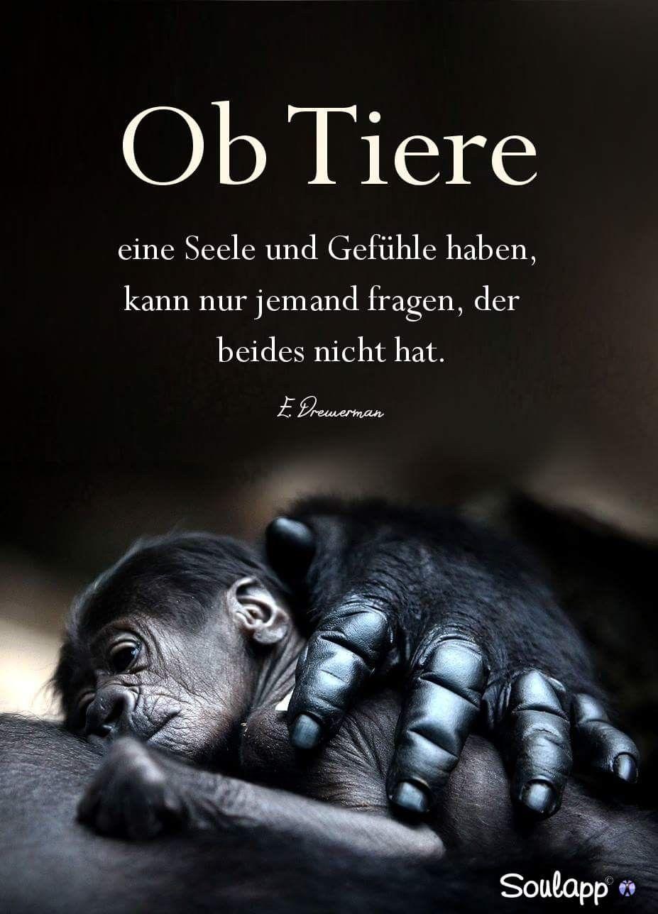 Pin von Juliette Nagorka auf Welt | Quotes, Animals und True words