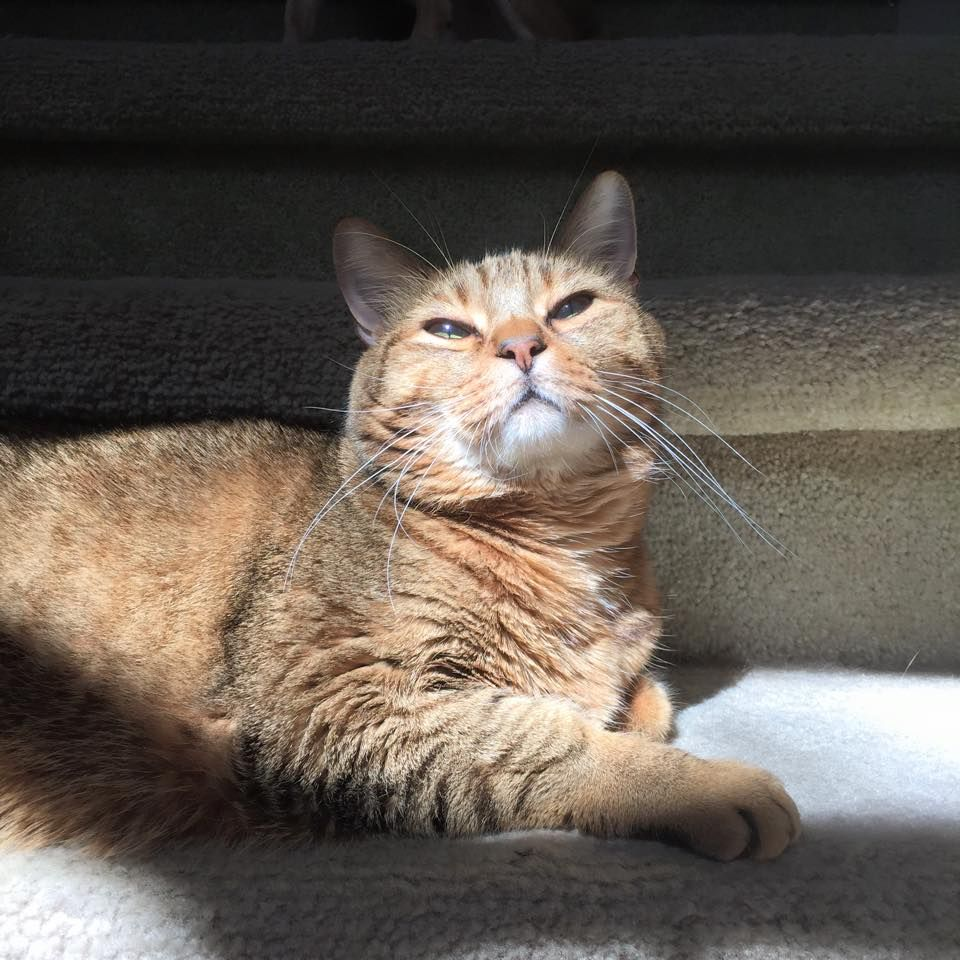 Oliver Catching The Sun Submitted By Sitter Karen C Pets