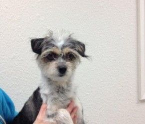 Adopt Empire On Terrier Dogs Terrier Mix Dogs Dogs