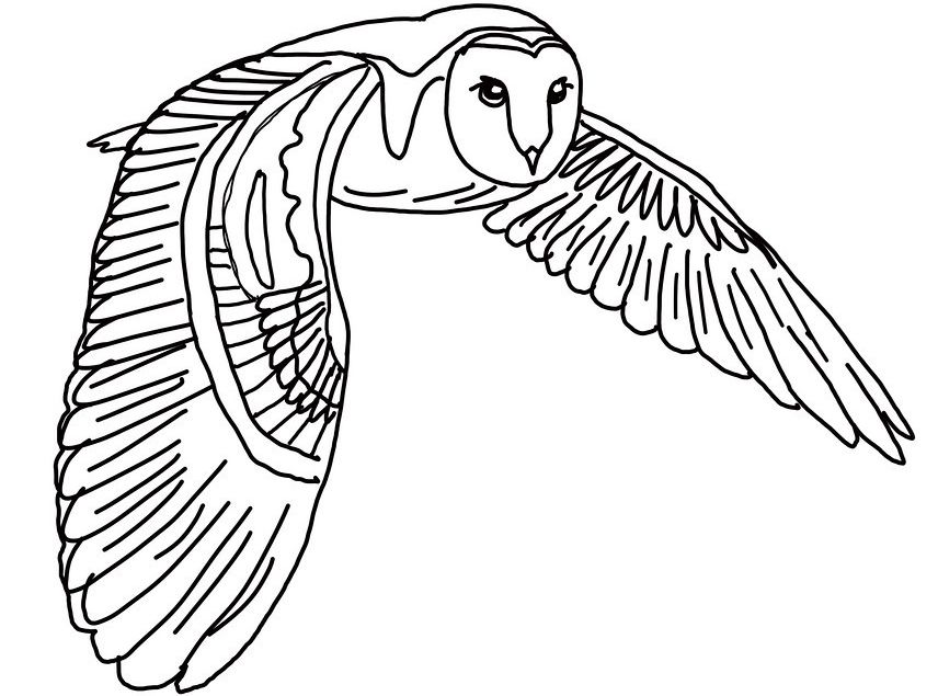 coloring pages of barn owls - photo#23