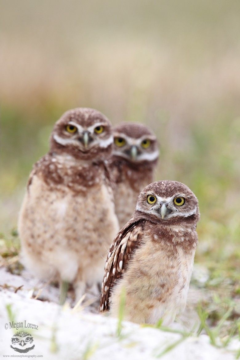 Photograph The Three Stooges by Megan Lorenz on 500px