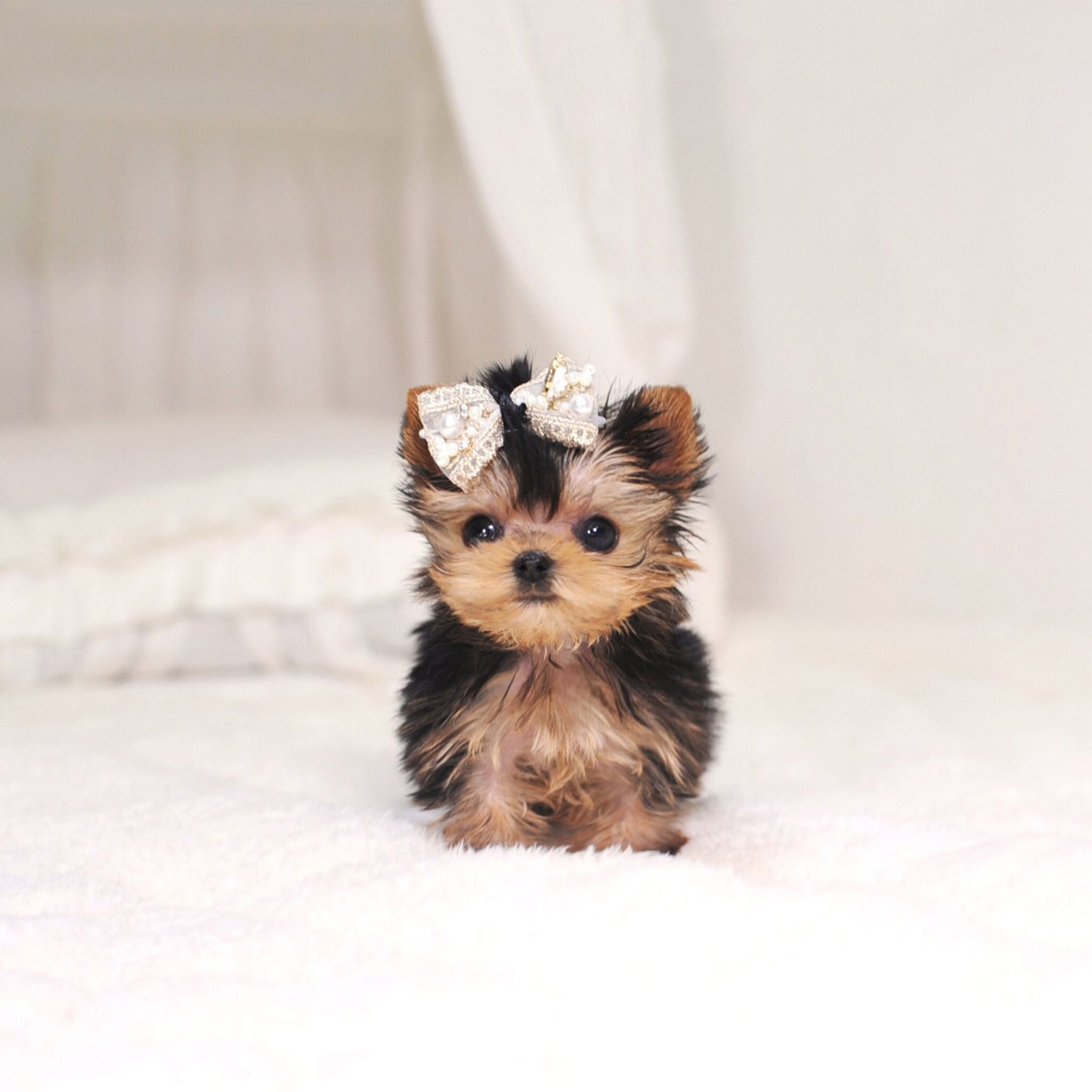 Pin By Ava Jenkins On Cute Animals Cute Puppy Wallpaper