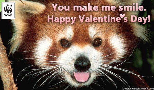 3c41daa89 Valentine's Day ecard red panda | CULTURE, SPIRITUAL, MORAL ...