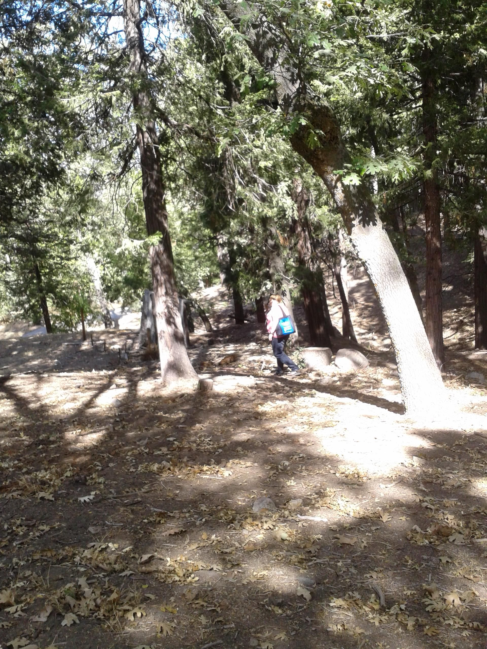 Pinecrest Camp Grounds Camping Hacks Tent Camping Family