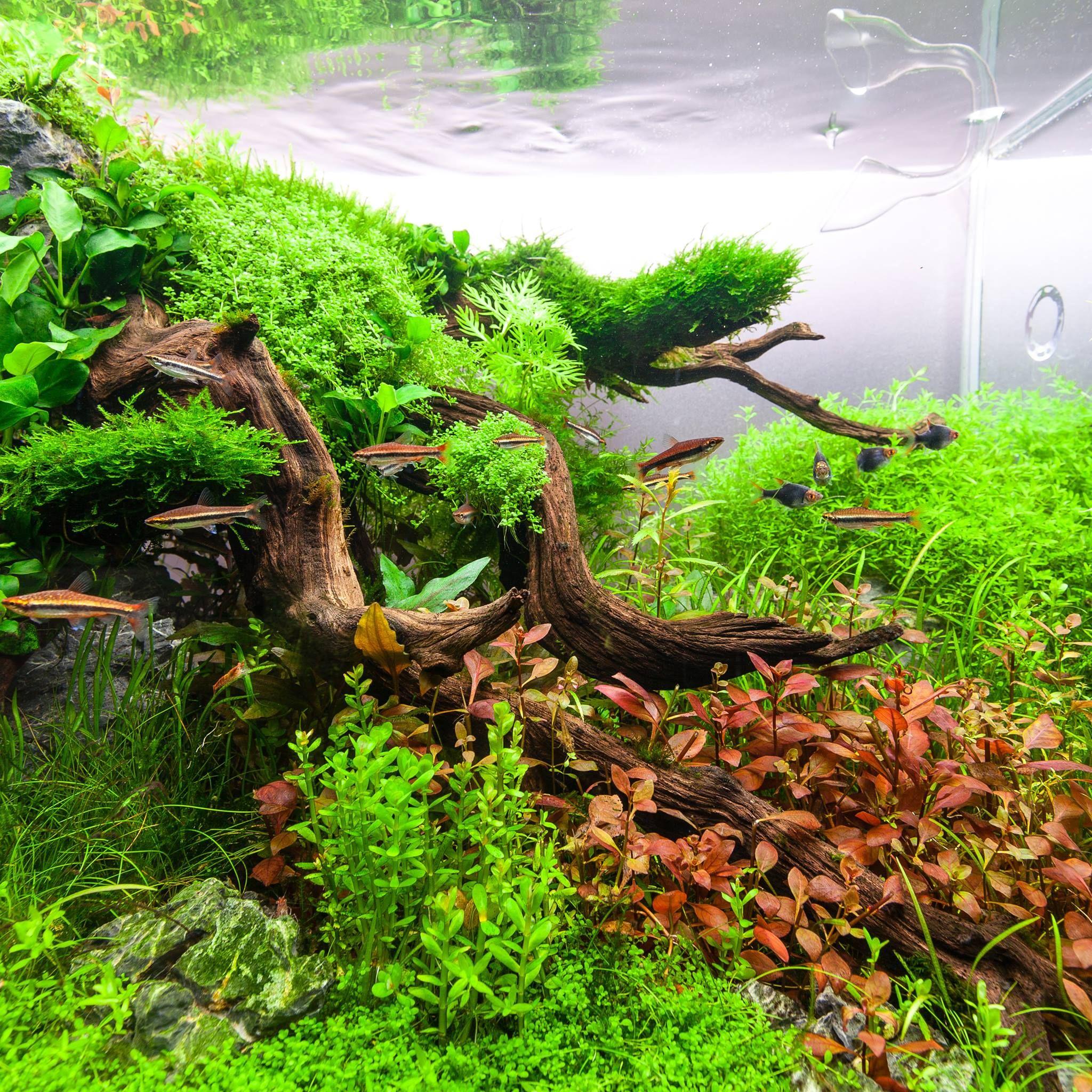 Tropica Aquarium Plants line 1000 Aquarium Ideas