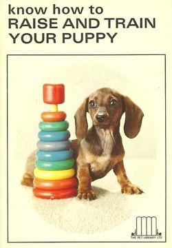 puppy dachshund training