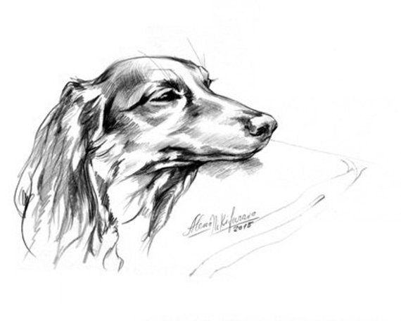 Dog Dachshund Portrait Daydreaming Doxie 2 Instant Download