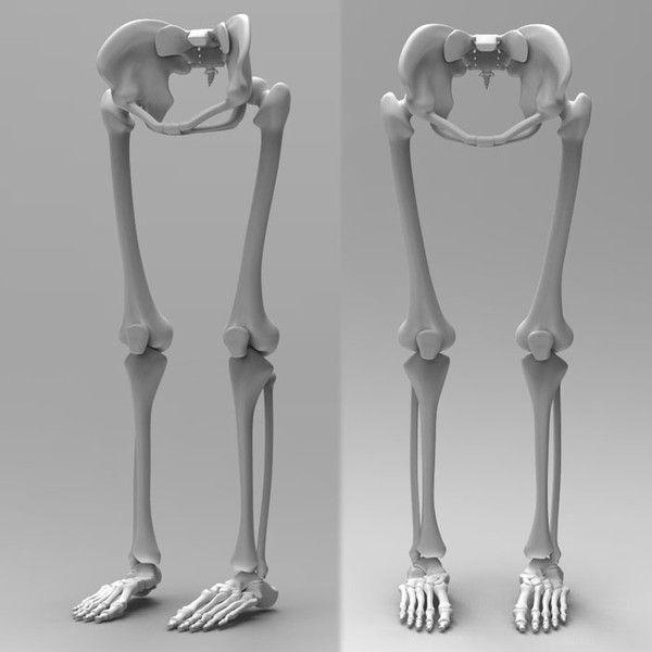 Human Bone Anatomy Leg 002ga1ce8d65 A105 4caf 8278