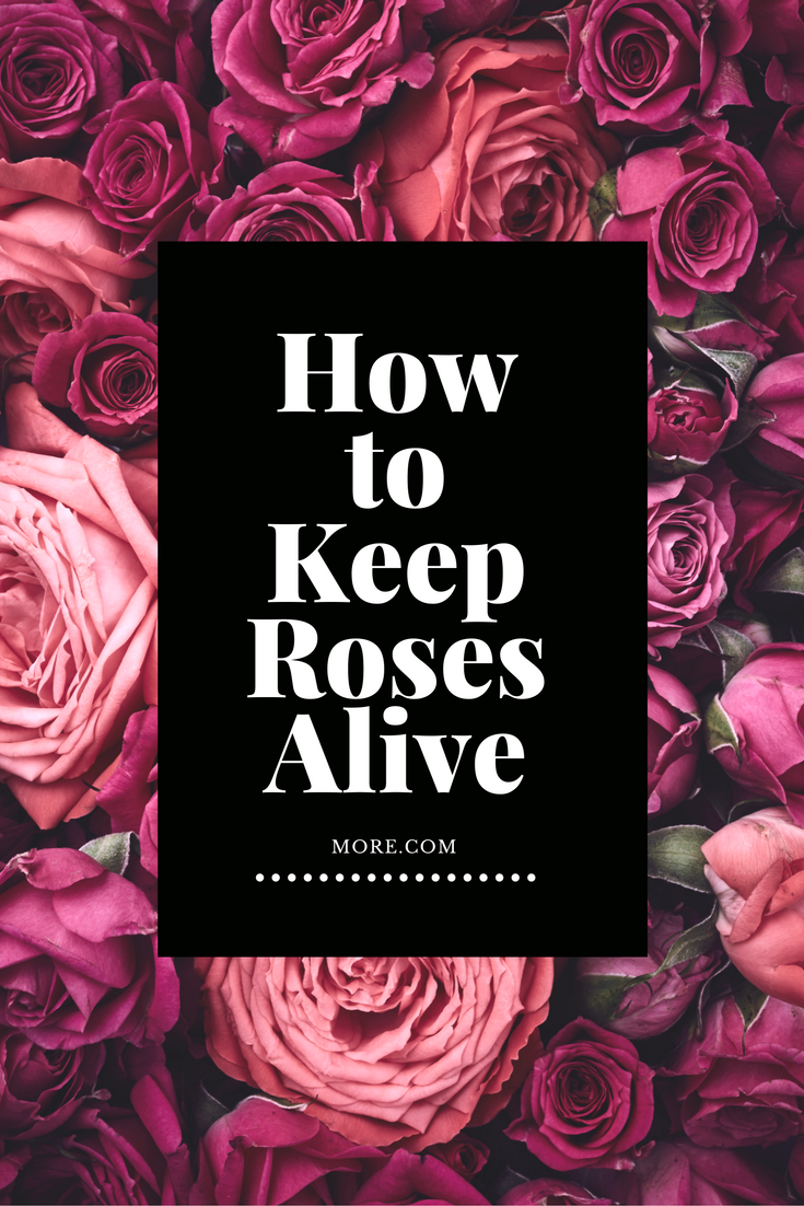 How to Keep Roses Alive   Flower, Gardens and Flowers