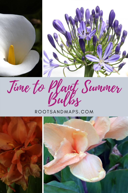 Time To Plant Summer Bulbs Summer Bulbs Plant Flower Bulbs Plants