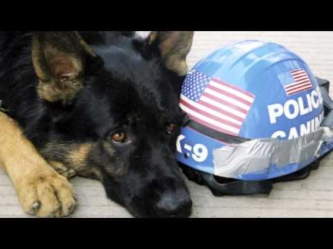 A Special Breed Of Hero Dog Hero Animal Heros Working Dogs