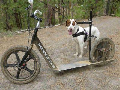 Dog Powered Scooter (dogpoweredscooter com) | Pet Stuff