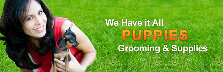 Puppy Plus Inc 954 255 8233 Puppy Grooming Puppies For Sale Puppies