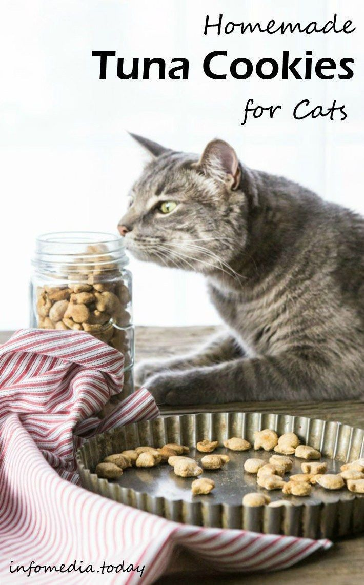 Homemade Tuna Cookies for Cats cattenthomemade Cat