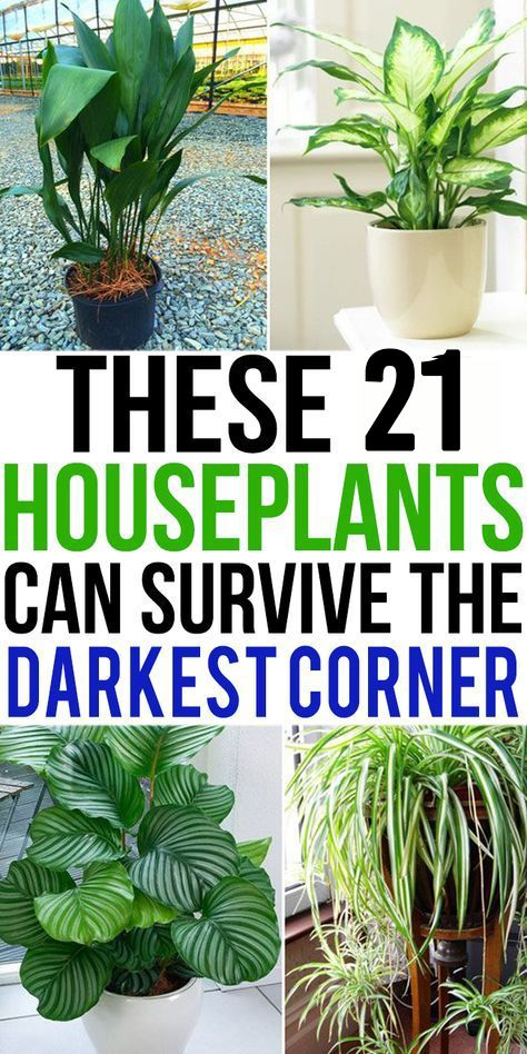Photo of 21 Houseplants That Can Survive Darkest Corner of Your House