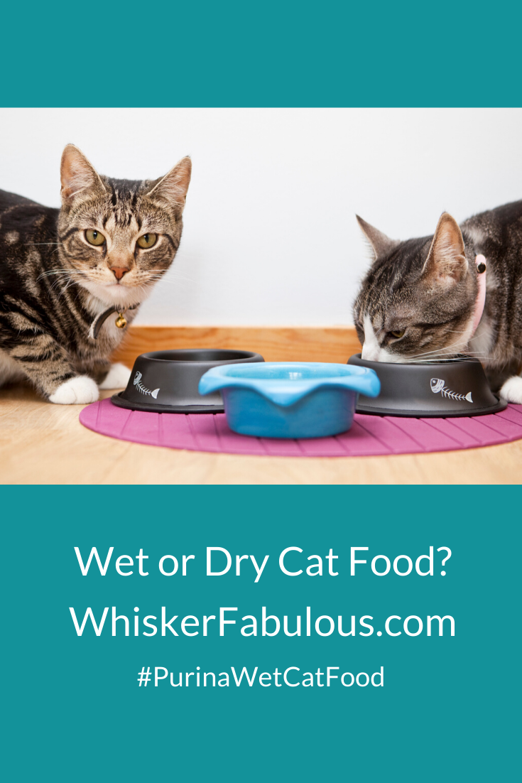 Should You Mix Dry And Wet Cat Food Together Cat Food Dry Cat Food Cats