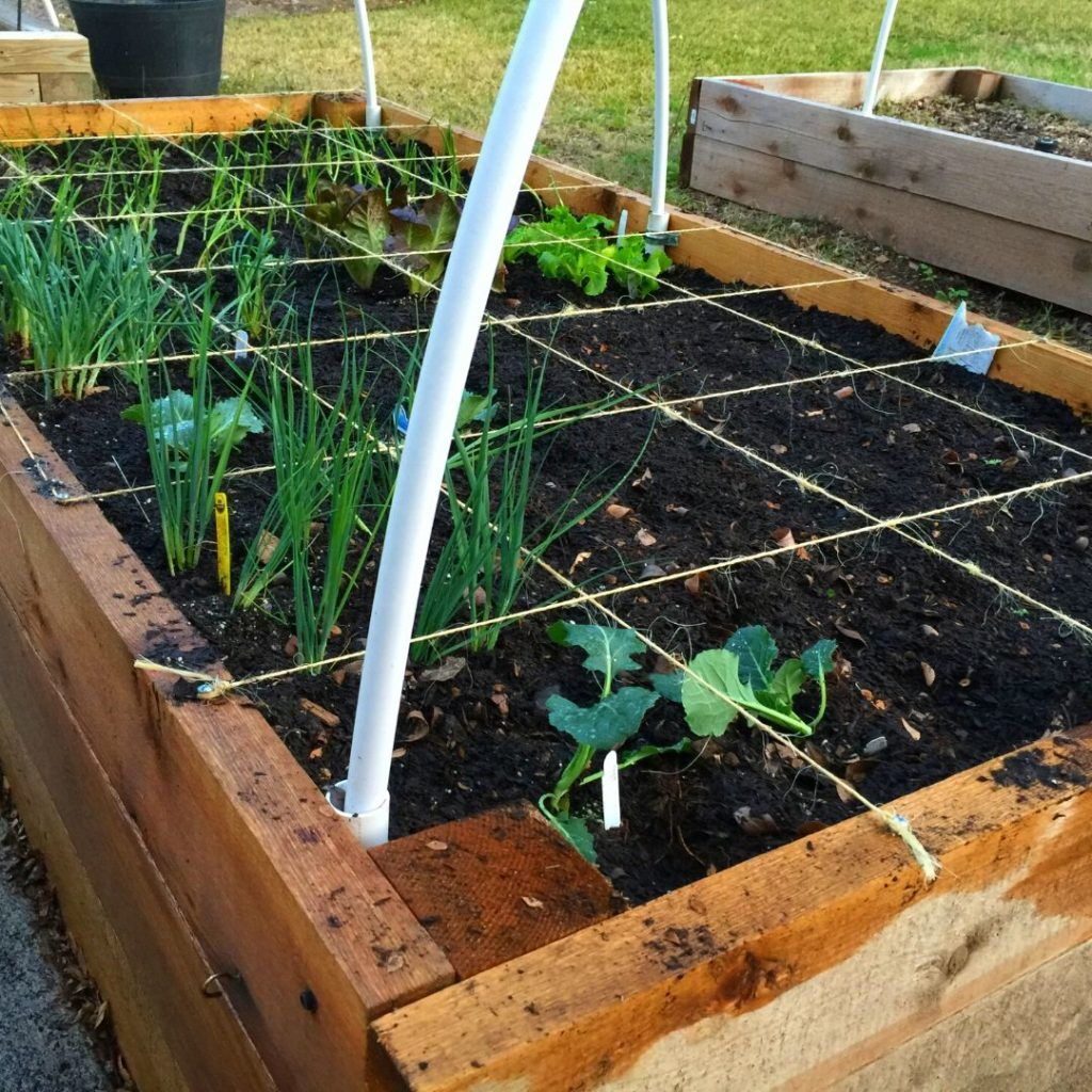 How To Start Raised Bed Vegetable Gardening For Beginners Slick Garden In 2020 Vegetable Garden For Beginners Vegetable Garden Raised Beds Square Foot Gardening