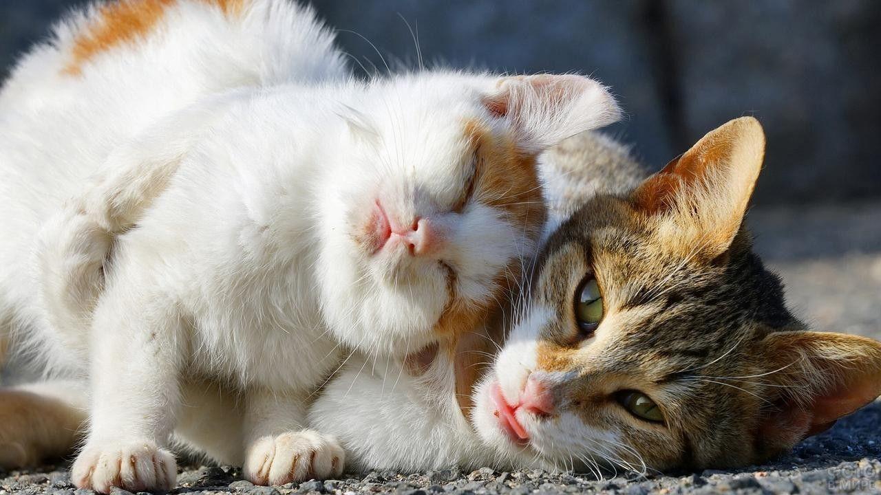 Кошки с котятами (31 фото) в 2020 г   Животные, Котята ...
