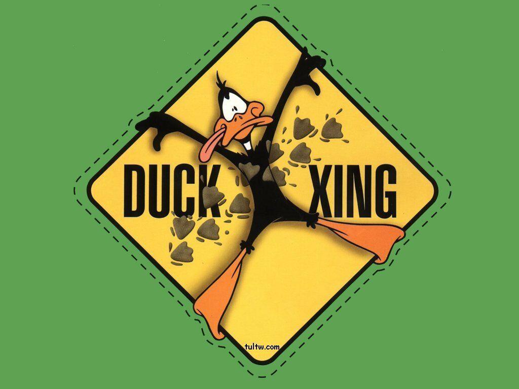 Daffy Duck Looney Tunes Cartoon Series Desktop Wallpaper Free Cartoon Wallpaper Daffy Duck Hintergrundbilder
