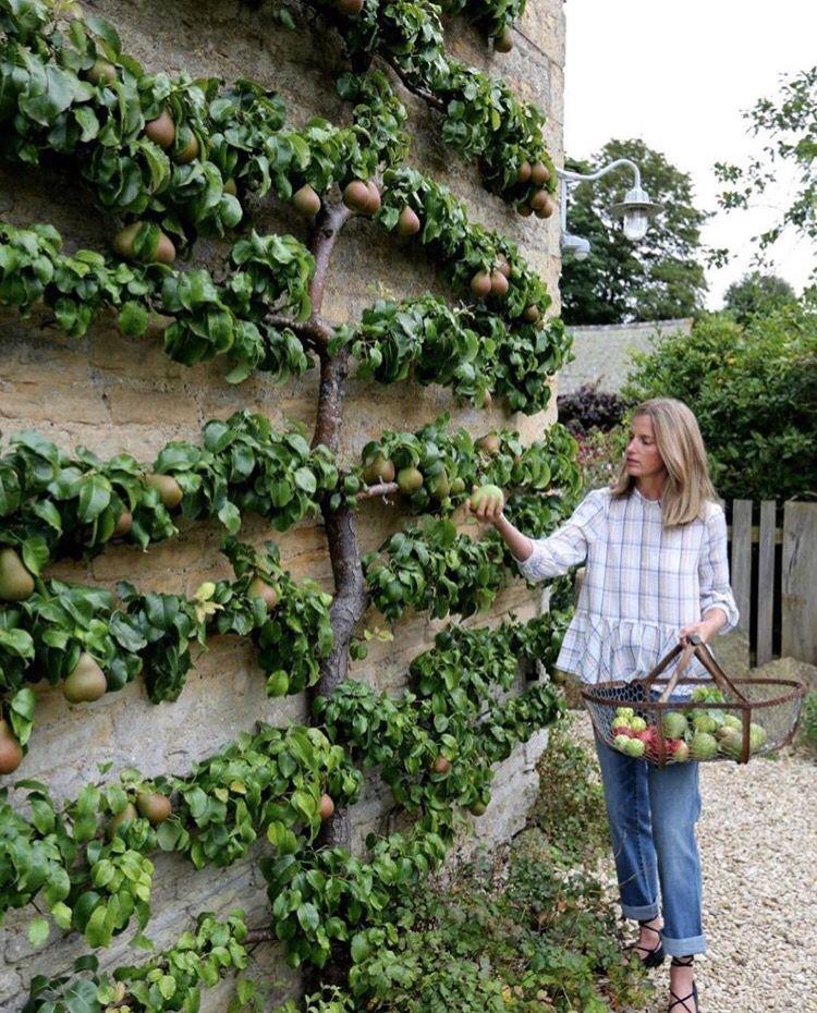Pin van jojanneke drijver op home garden tuin for Tuinontwerp eetbare tuin