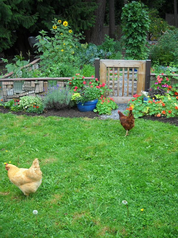 Free range chickens in the garden   Free range chickens ...