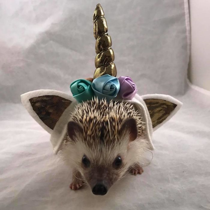 Boru Wanted To Be A Unicorn For His Birthday