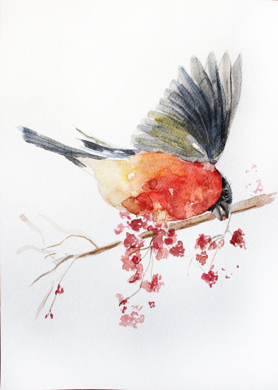 bird drawing art Original Drawing Bullfinch gifts
