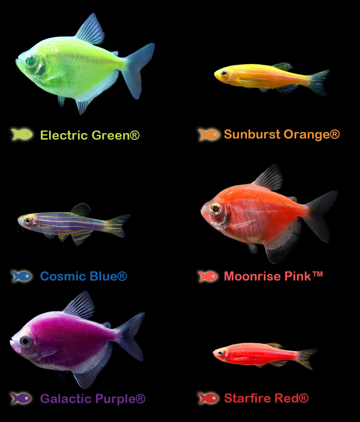 What's your favorite GloFish Color: Electric Green, Starfire Red ...